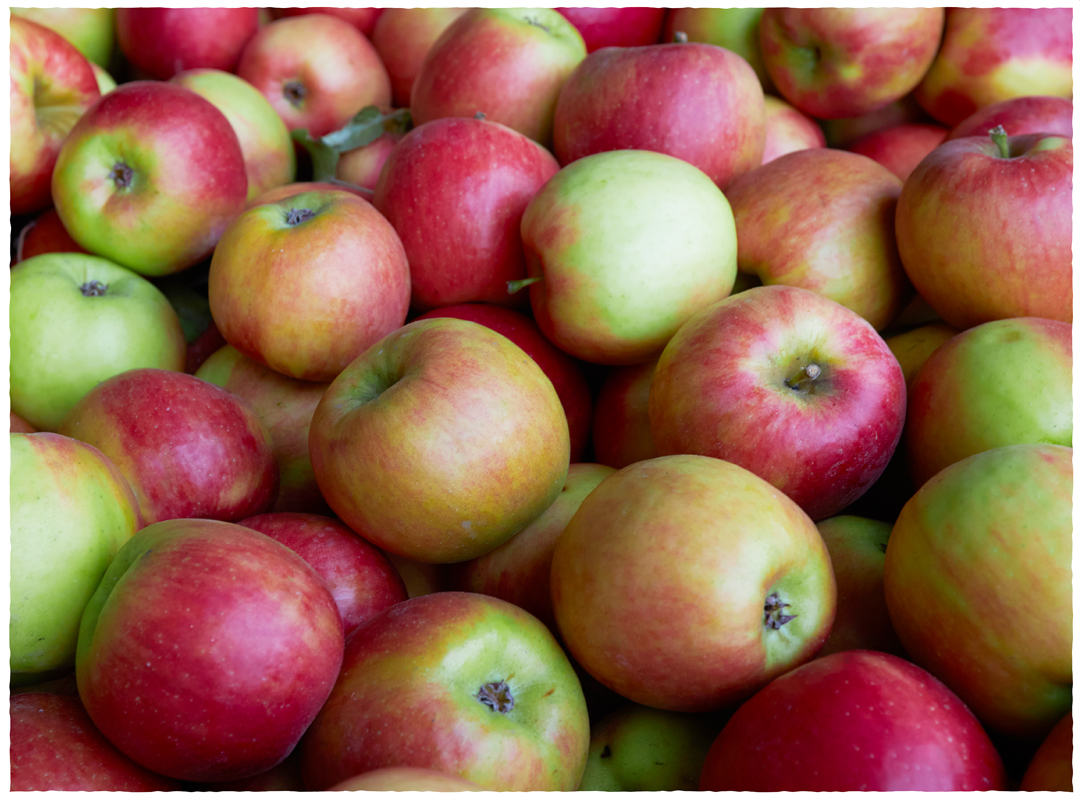 Dig Local Apples